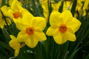 Narcis-03